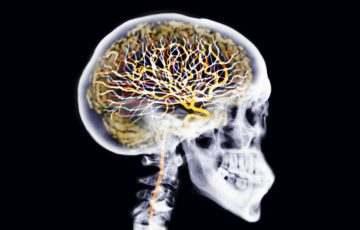 Magyar kutatók vizsgálnák, hogy mit tesz a vírus az aggyal