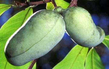 Tanzániában kimutatták, hogy egy banán is lehet koronavírusos