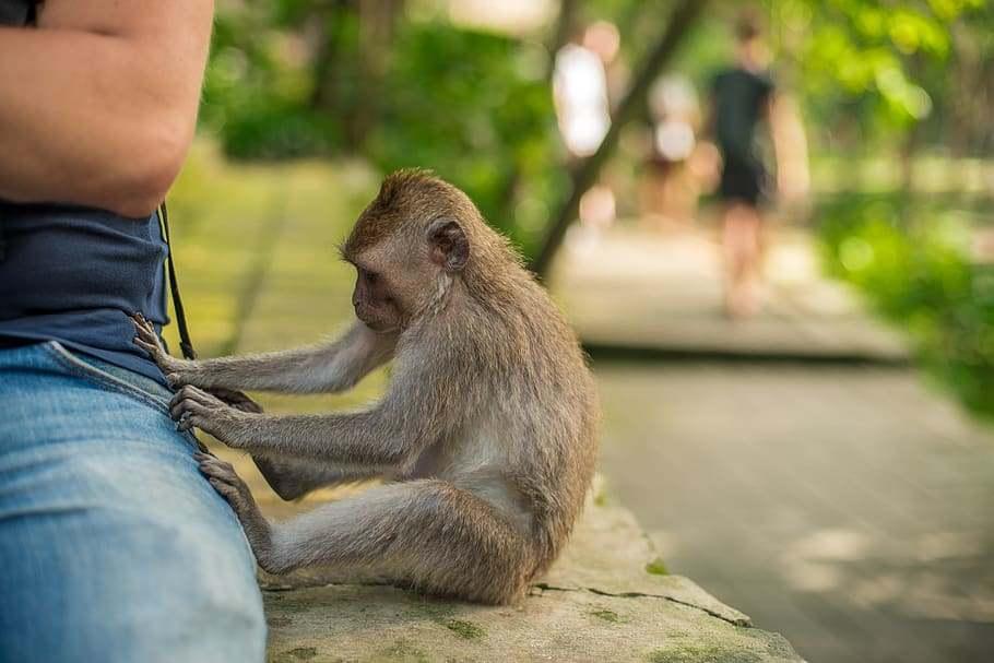 Megelevenedett a Majmok bolygója Indiában